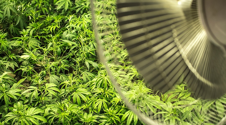 Cannabis Greenhouse Monitoring