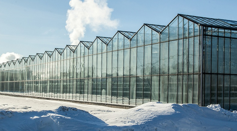 WinterGreenhouse