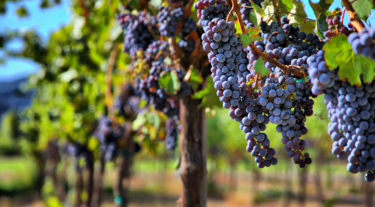 Vineyard Operation